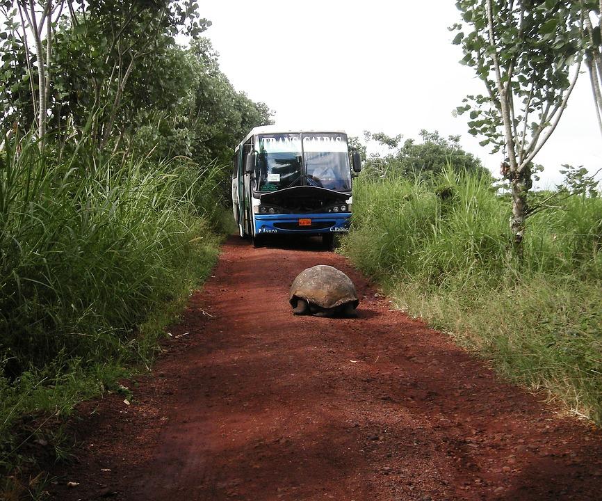 Tortoise, Giant, Water, Road, Bus, Rocks, Island