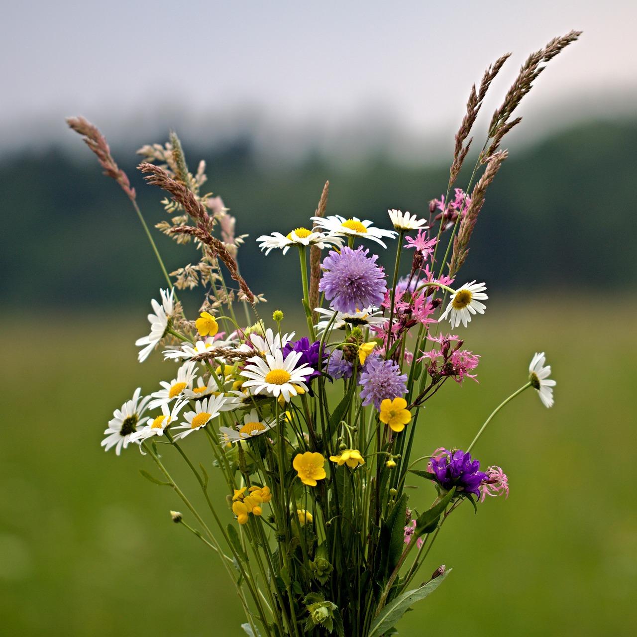 Словами, цветы луговые картинки прикольные