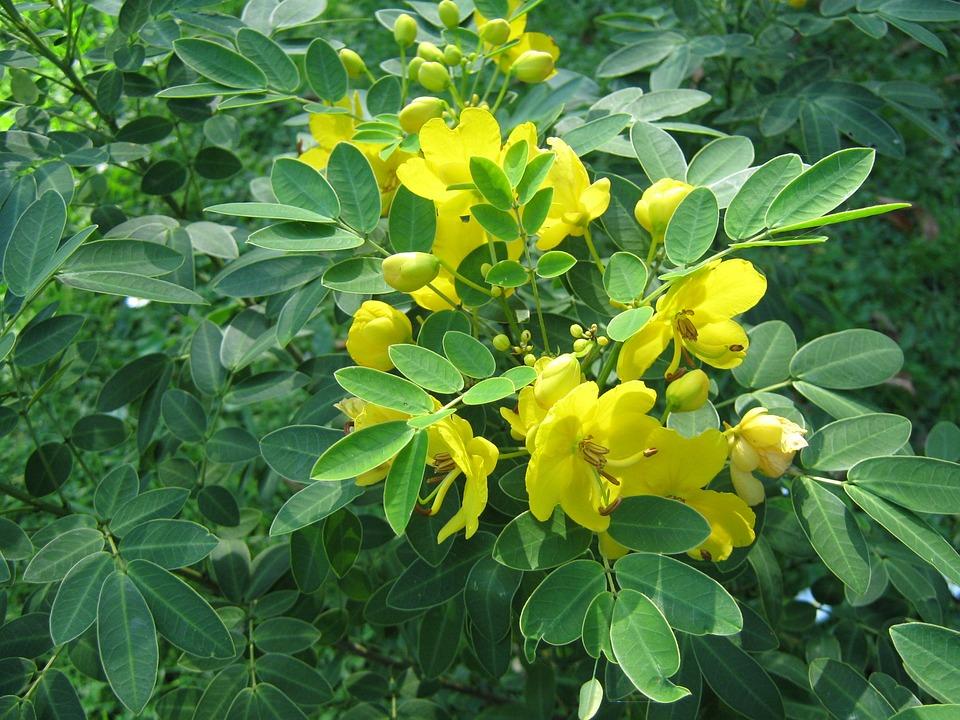Fleurs Jaune Arbuste Photo Gratuite Sur Pixabay