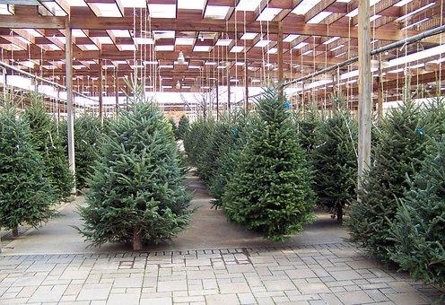 Christmas, Trees, Nursery, Winter, Xmas