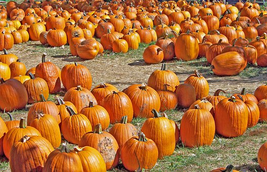 Pumpkins, Autumn, Halloween, Fall