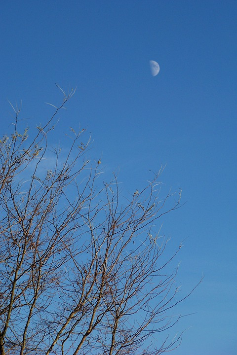 Moon, Tree, Sky, Clear, Blue, Daytime, Half Moon