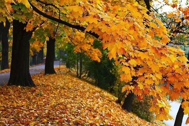 Autumn Fall Season · Free Photo On Pixabay