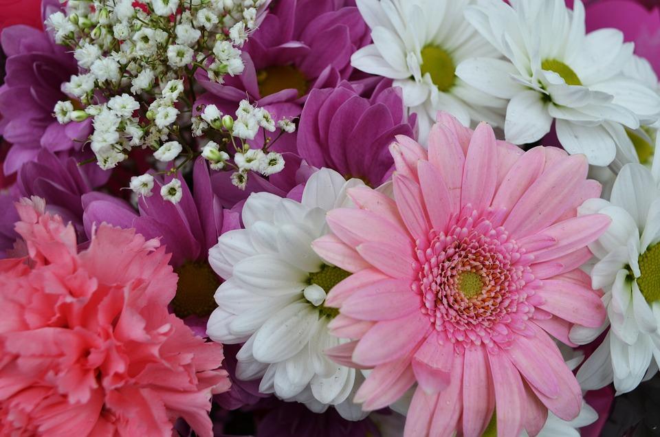 Blumen Natur Farbe · Kostenloses Foto auf Pixabay