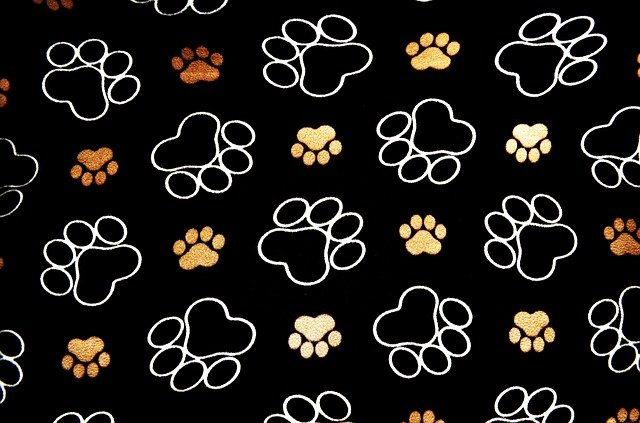 Dog Pawprint Tracks 183 Free Image On Pixabay