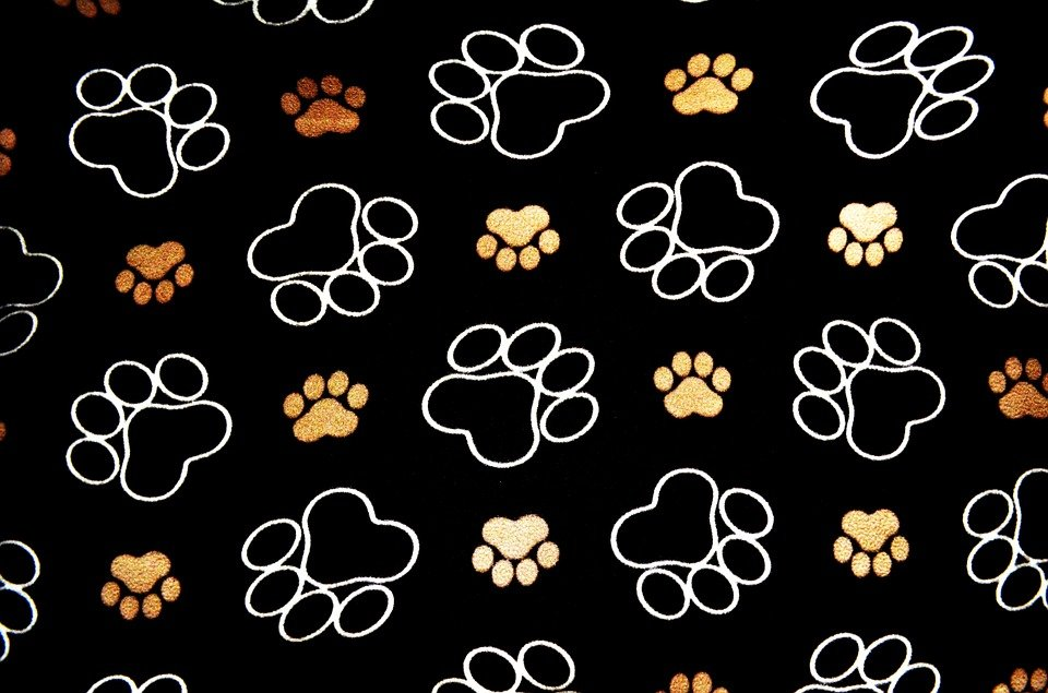 dog pawprint tracks  u00b7 free image on pixabay dog paw print vector art dog paw print vector art free