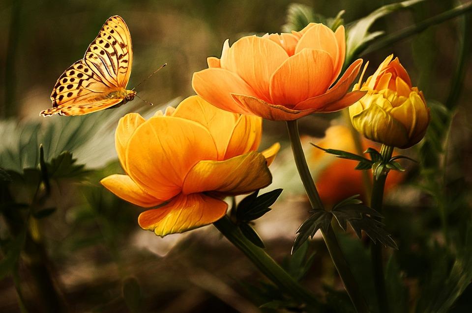 Tippek az egynyári virágos kert készítéséhez