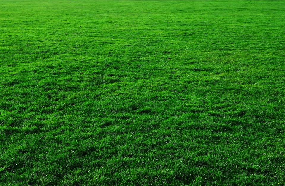 Sfondo Verde Erba Foto Gratis Su Pixabay