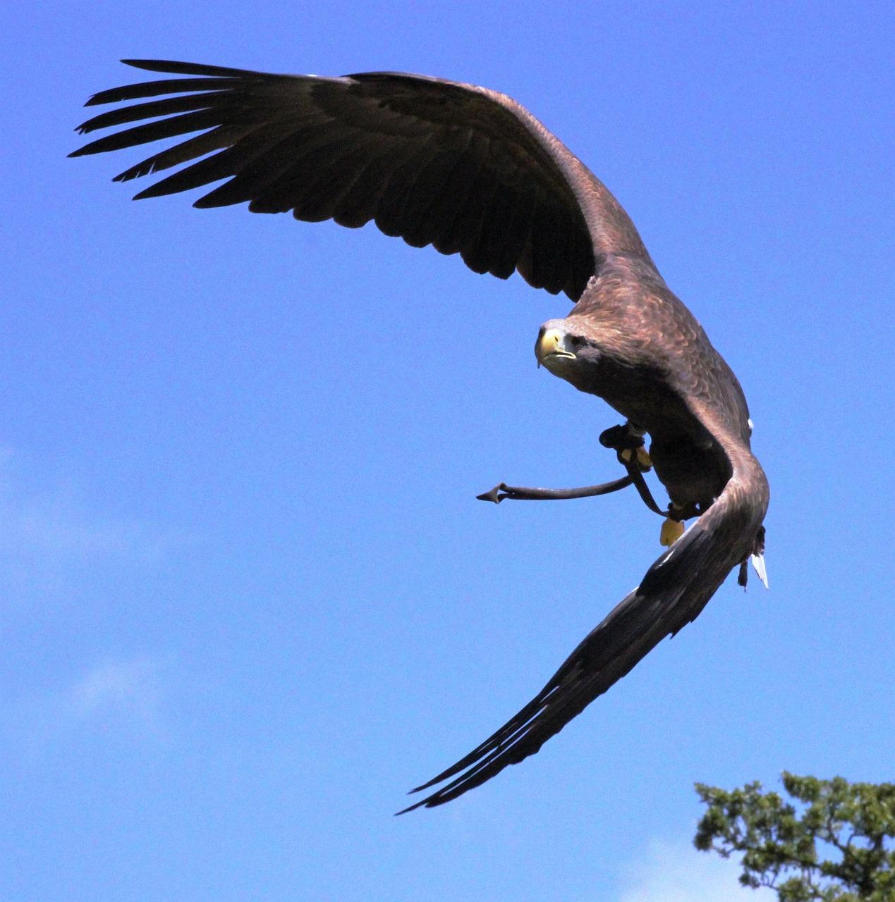 Картинки свободный орел