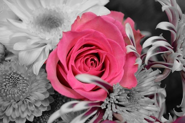 Gratis fotografie: Blomster, Planter, Rose, Natur - Gratis bilde pa Pixabay - 20366