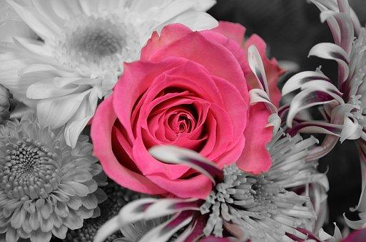 Květiny, Rostliny, Rose, Příroda, Makro