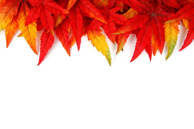 Free Photo Abstract Autumn Background Free Image On