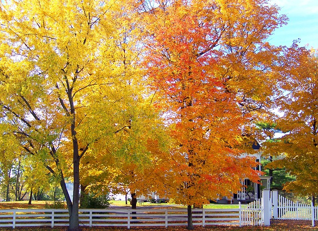 Trees Autumn Fall · Free Photo On Pixabay