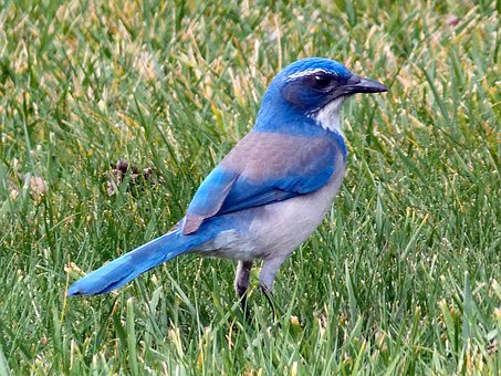 Bluebird Bird Animal Mountain Bluebird Sia
