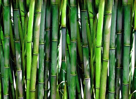 Bamboo Forest Green Plant Wood Asia Japane