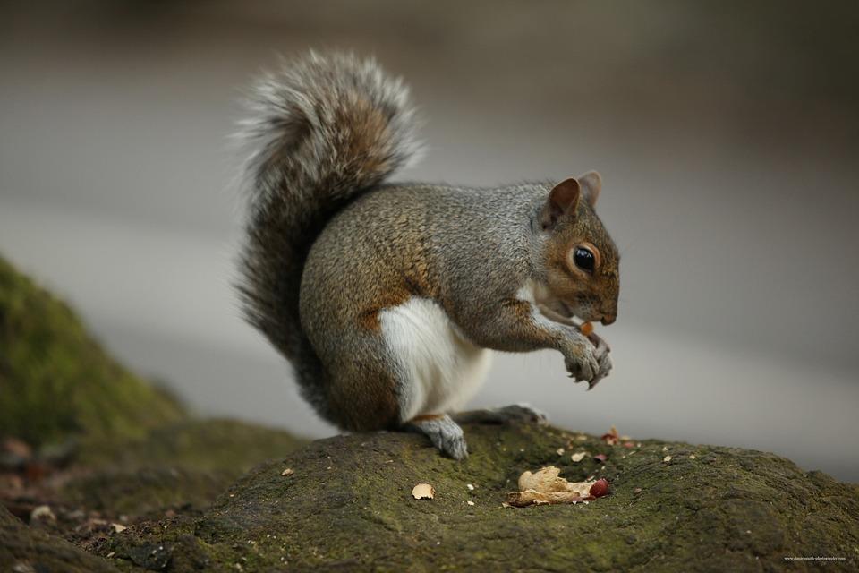 Tupai Makanan Kacang Foto Gratis Di Pixabay