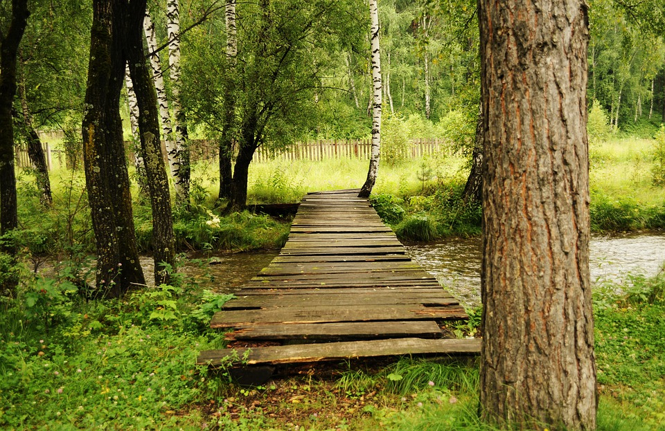 Bridge, Wooden, Woods, Landscape, Forest, Greens