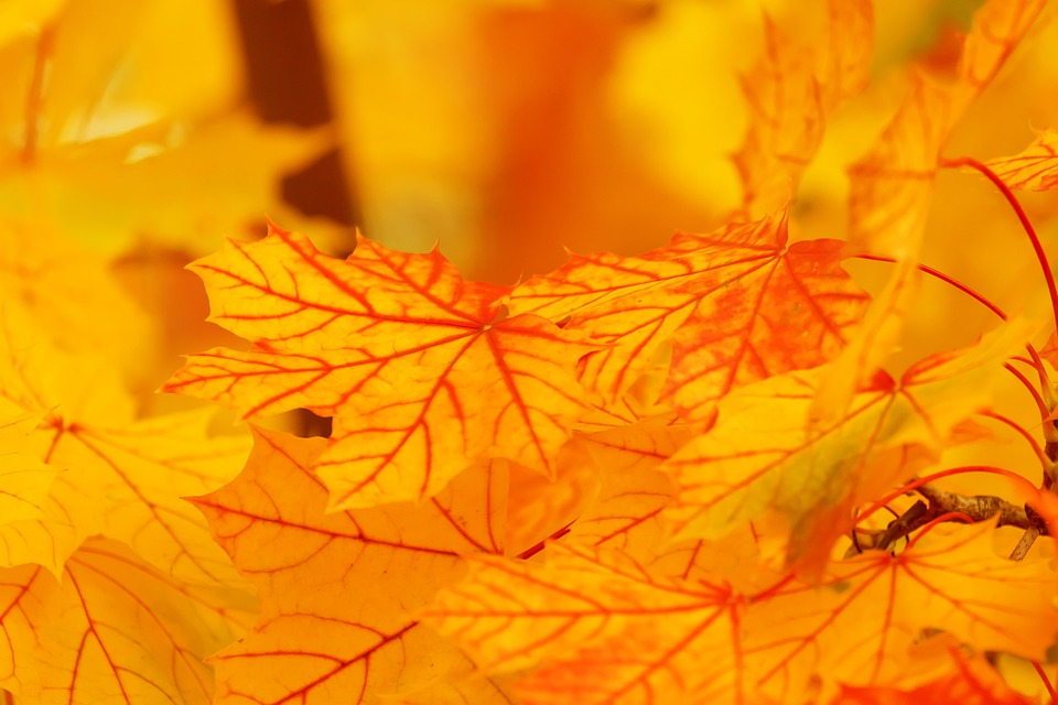 Free Photo Abstract Autumn Background Image On