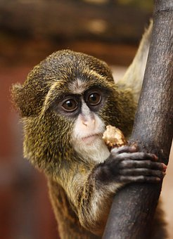 5 000 Monkey Pictures And Images Hd Pixabay Pixabay