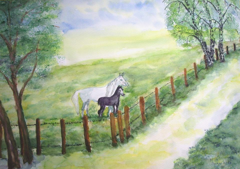 Kuda Kopel Padang Rumput Gambar Gratis Di Pixabay
