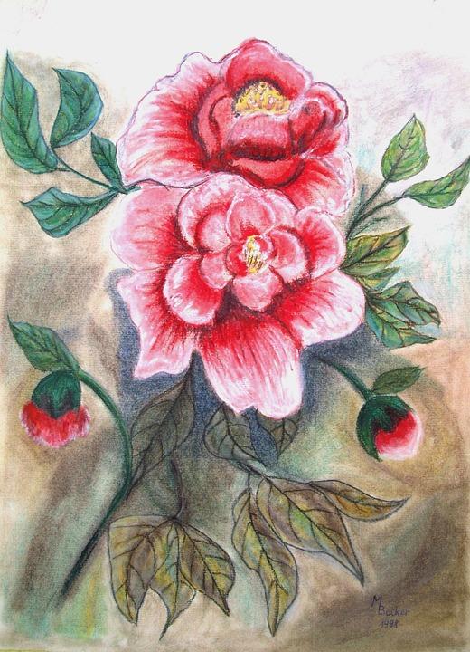 Peoni Bunga Lukisan Gambar Gratis Di Pixabay