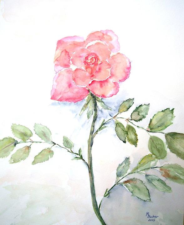 Gül çiçek Boyama Pixabayde ücretsiz Resim