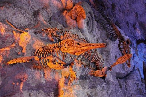 Antique, Des Animaux, Archéologie, Os