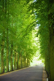 Alley, Avenue, Canopy, Green, Landscape