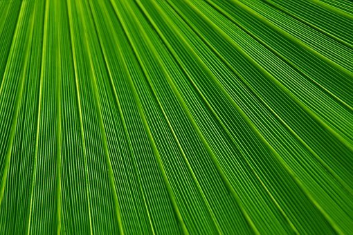 Abstract, Leaf, Plant, Background