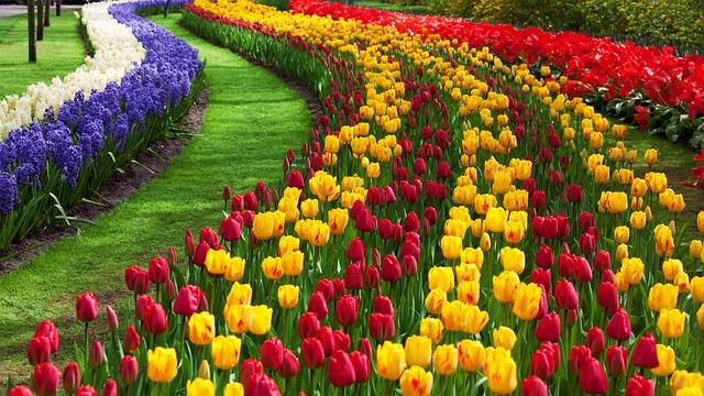 Belle Fleur Red Photo Gratuite Sur Pixabay