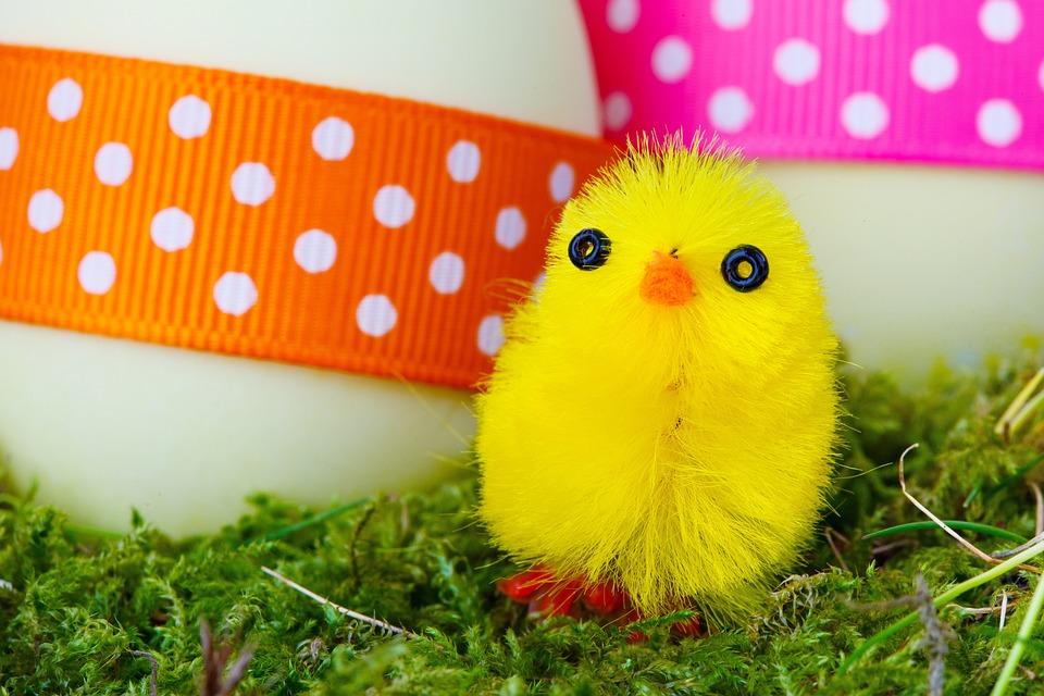 80+ Gambar Ayam Warna Kuning