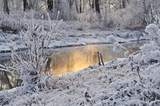 Sneeuw, Bomen, Winter, Water, Seizoen