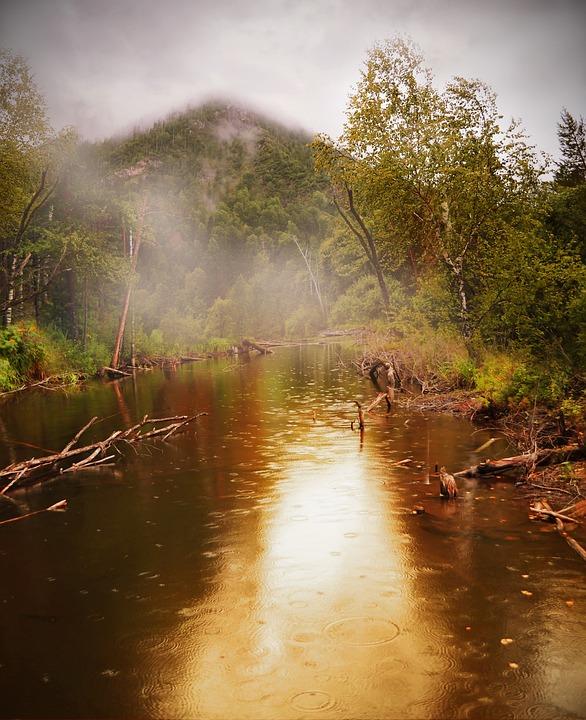 Pond, Forest, Nature, Fog, Mist, Rain, Raindrops