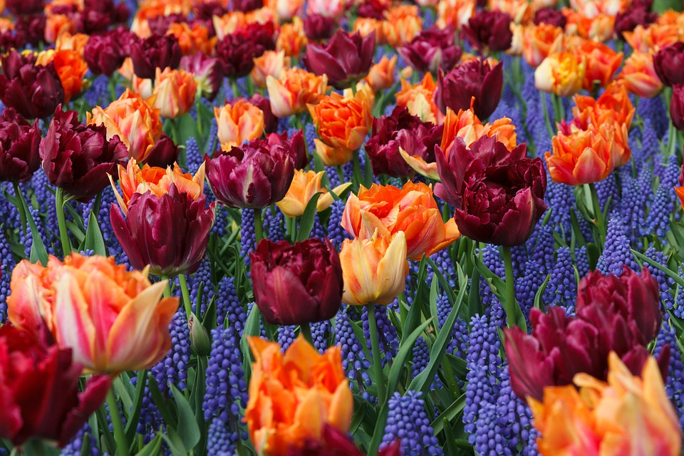 https://cdn.pixabay.com/photo/2012/03/04/01/02/orange-22204_960_720.jpg