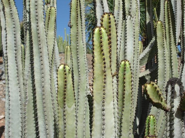kaktus kakteen pflanze kostenloses foto auf pixabay. Black Bedroom Furniture Sets. Home Design Ideas
