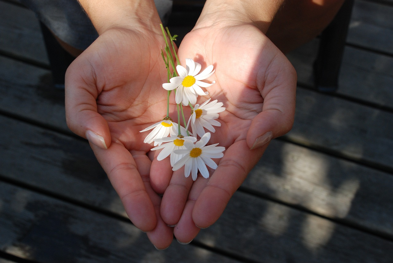 Flower Hands Giving - Free photo on Pixabay