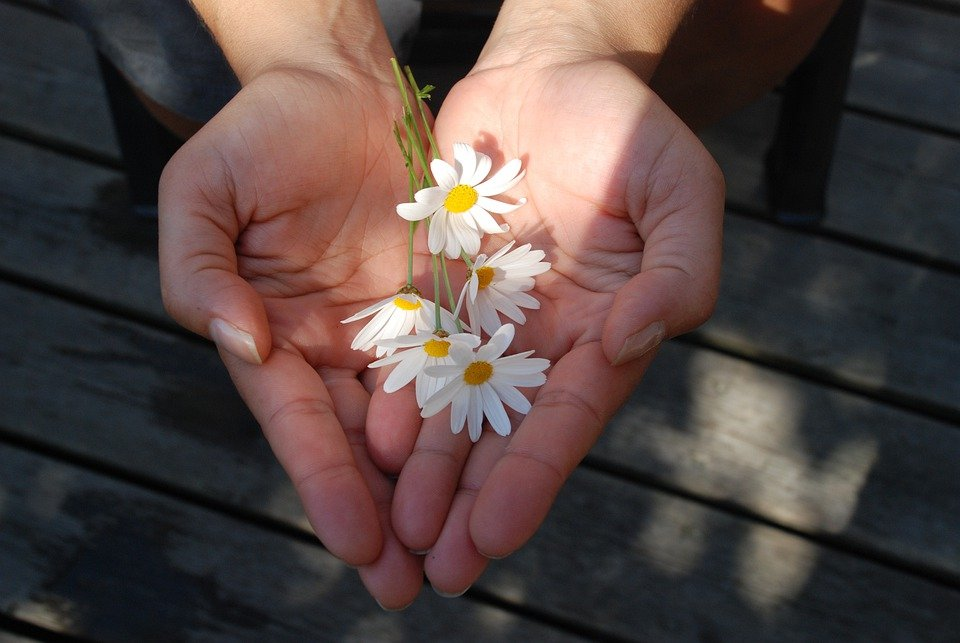 Flower, Hands, Giving, Give, Gift, Take