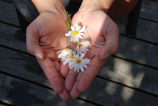 Blume, Hände, Angabe, Geben, Geschenk