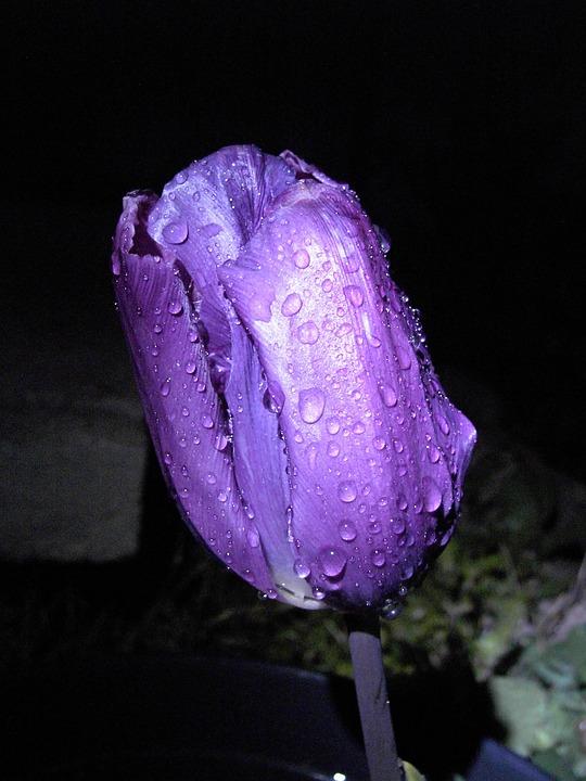 Bunga Biru Foto Gratis Di Pixabay