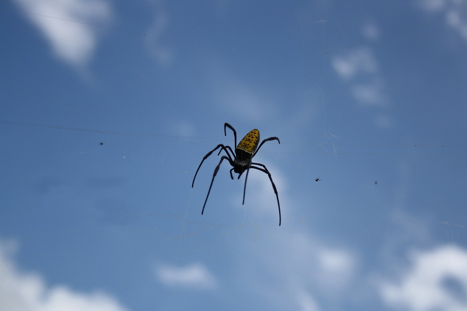 Free Photo Spider Insect Bug Arachnid Blue Free