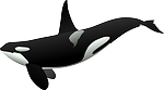 orca, killer whale, sea mammal