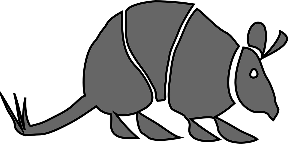 armadillo nocturnal mamal horny · free vector graphic on pixabay