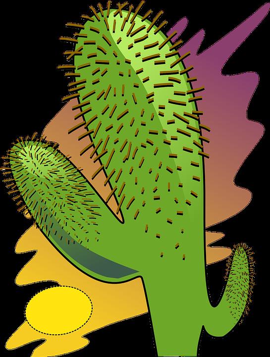 Cactus Desert Dry · Free vector graphic on Pixabay