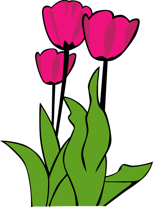 tulips pink flowers free vector graphic on pixabay rh pixabay com free clipart spring flowers free spring flower black and white clipart