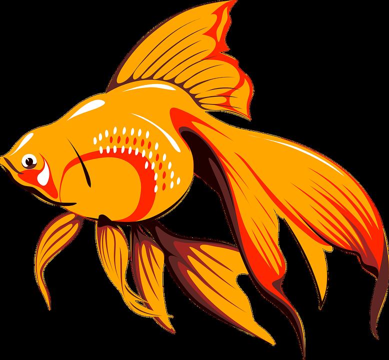 Ikan Mas Tangki Gambar Vektor Gratis Di Pixabay