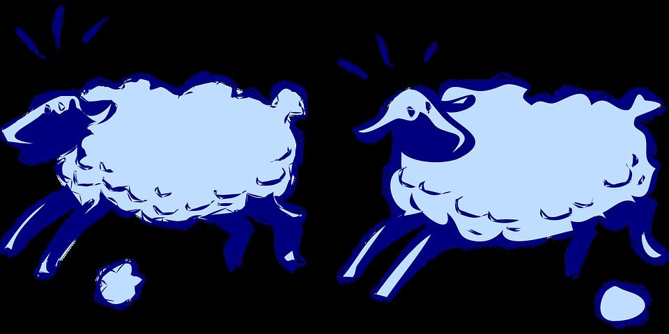 Sheep Running Lambs - Free vector graphic on Pixabay