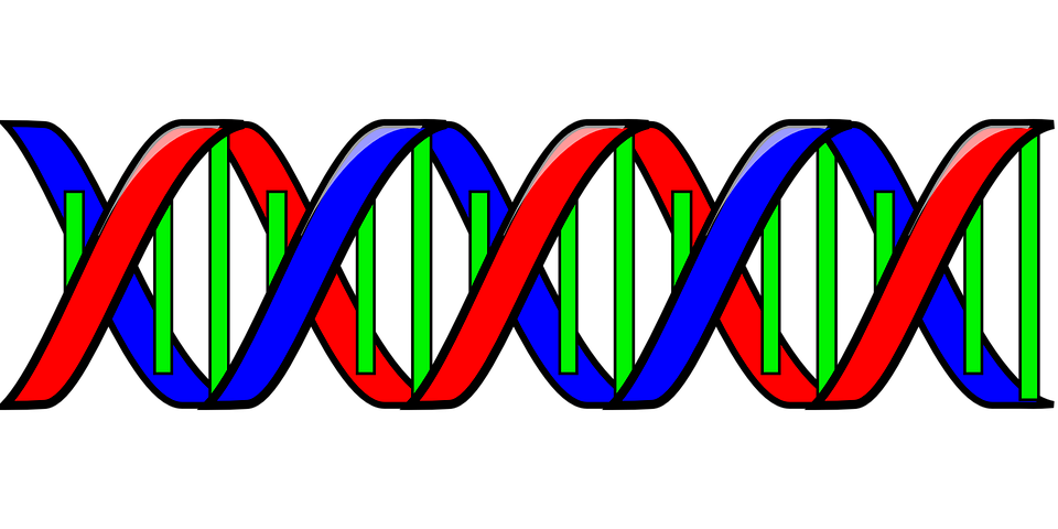 dna genetic code double helix free vector graphic on pixabay