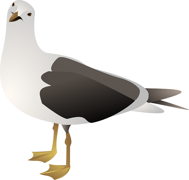 free vector graphic  gull  seagull  bird  sea  avian - free image on pixabay