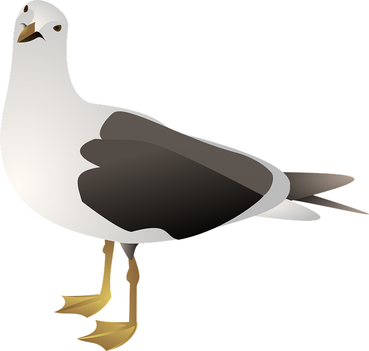 gull seagull bird  u00b7 free vector graphic on pixabay wing vector graphic wing vector free download