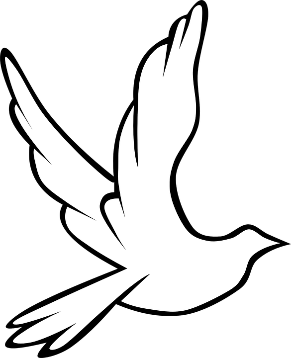 Dove Bird Symbol Free Vector Graphic On Pixabay